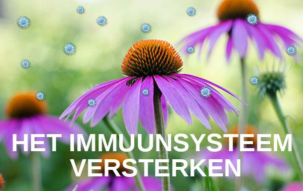 Online cursus het immuunsysteem versterken